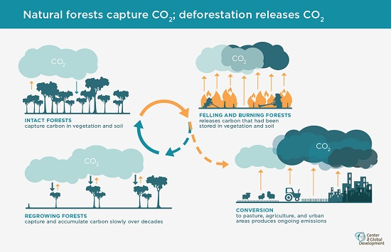 Infographic of carbon cycles in rainforests