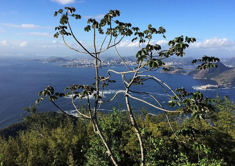 Tree in Brazil