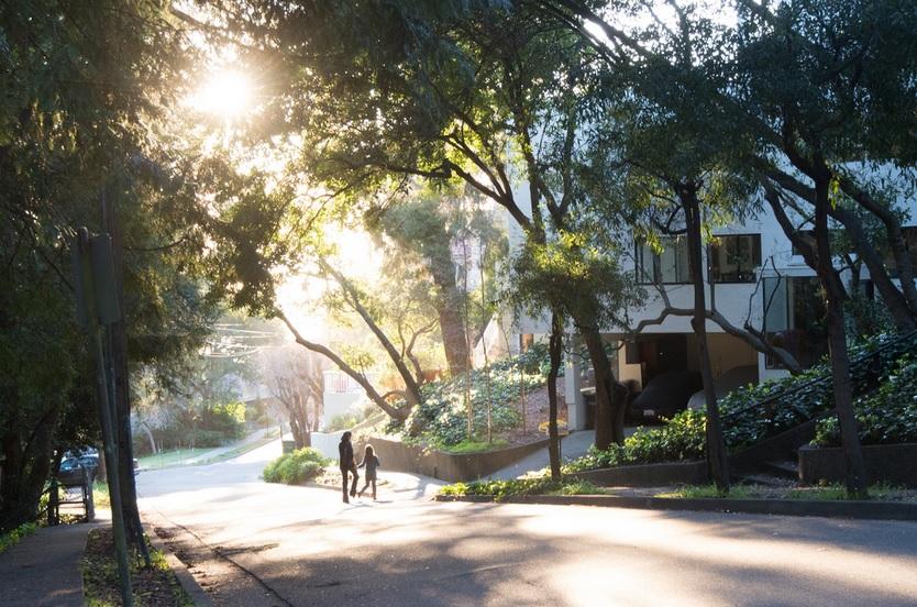 San Diego street foliage