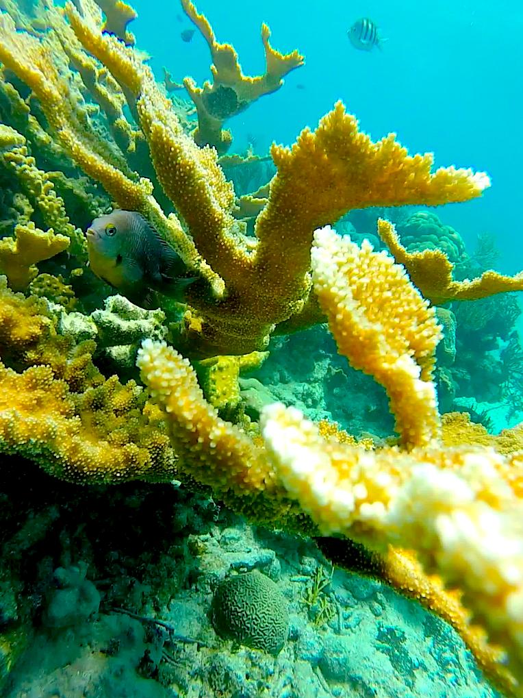 Coral reef near Cuba