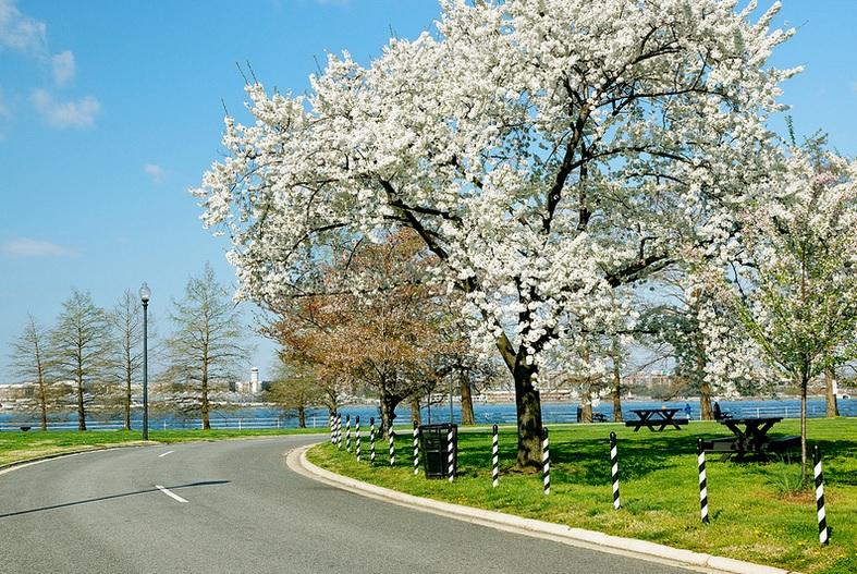 Washington, DC foliage