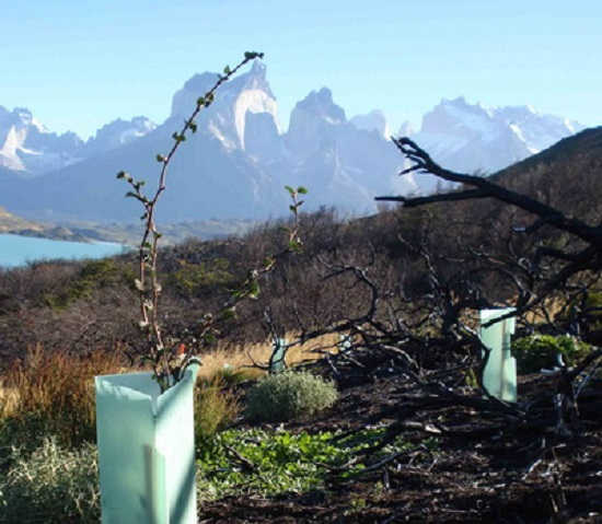 Tree planting in Patagonia