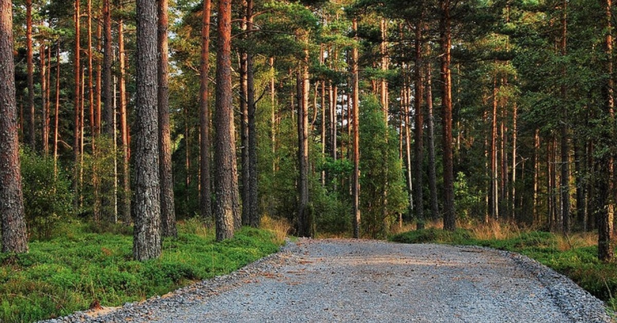 Could a Mature Timberland Asset Class Spur Conservation?