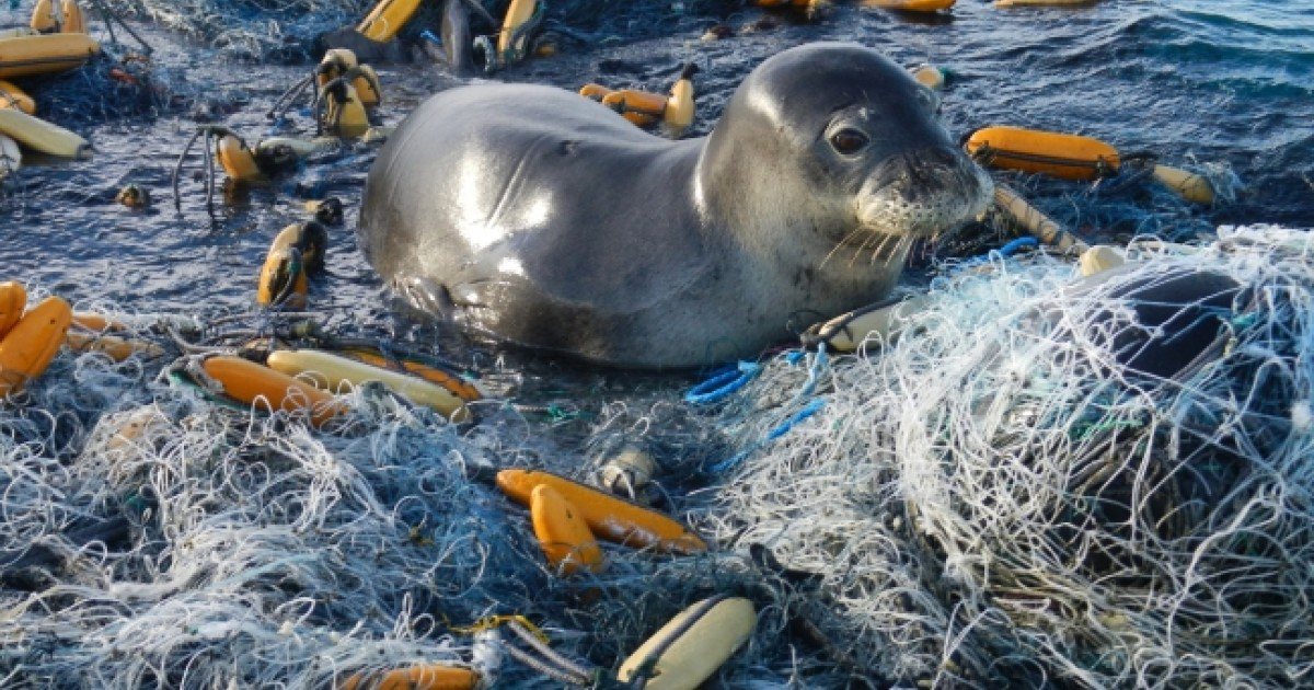 Financing the Battle Against Marine Plastic Pollution