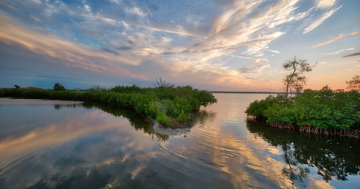 Mainstreaming Blue Carbon to Finance Coastal Resilience
